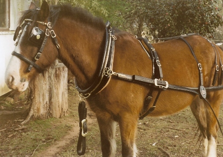 Show coach harness