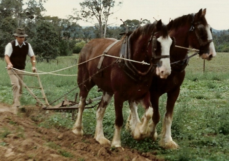 Plough Harness