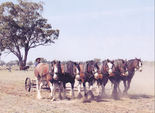 six horses plough harness