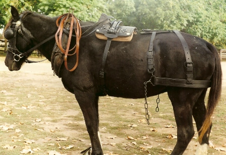 Dress Half-draught (medium delivery) Dray harness